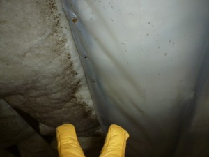 mold growth on insulation due to an improperly installed vapor barrier